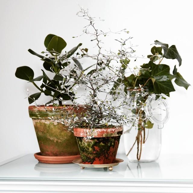 Plants, plants, everywhere plants! Denna samling från mitt arbetsrum #krukväxter #plantstagram #arkitektenstradgard #plantlove #plantaddiction #interiorinspiration #hedera #terracotta #mossa #blomstagram #växter