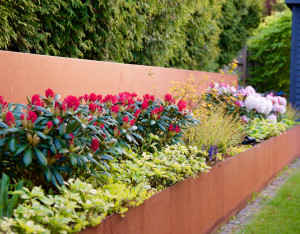 Några kvällsbilder på mina rhododendron