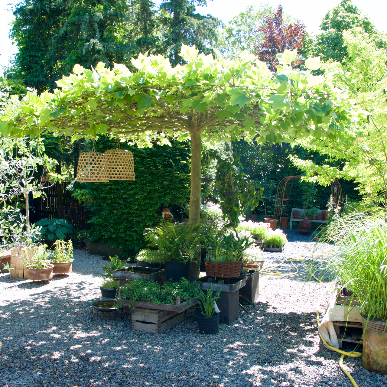 plantskola skåne träd