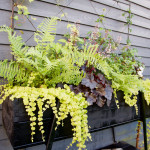 Tips på planteringslådor!