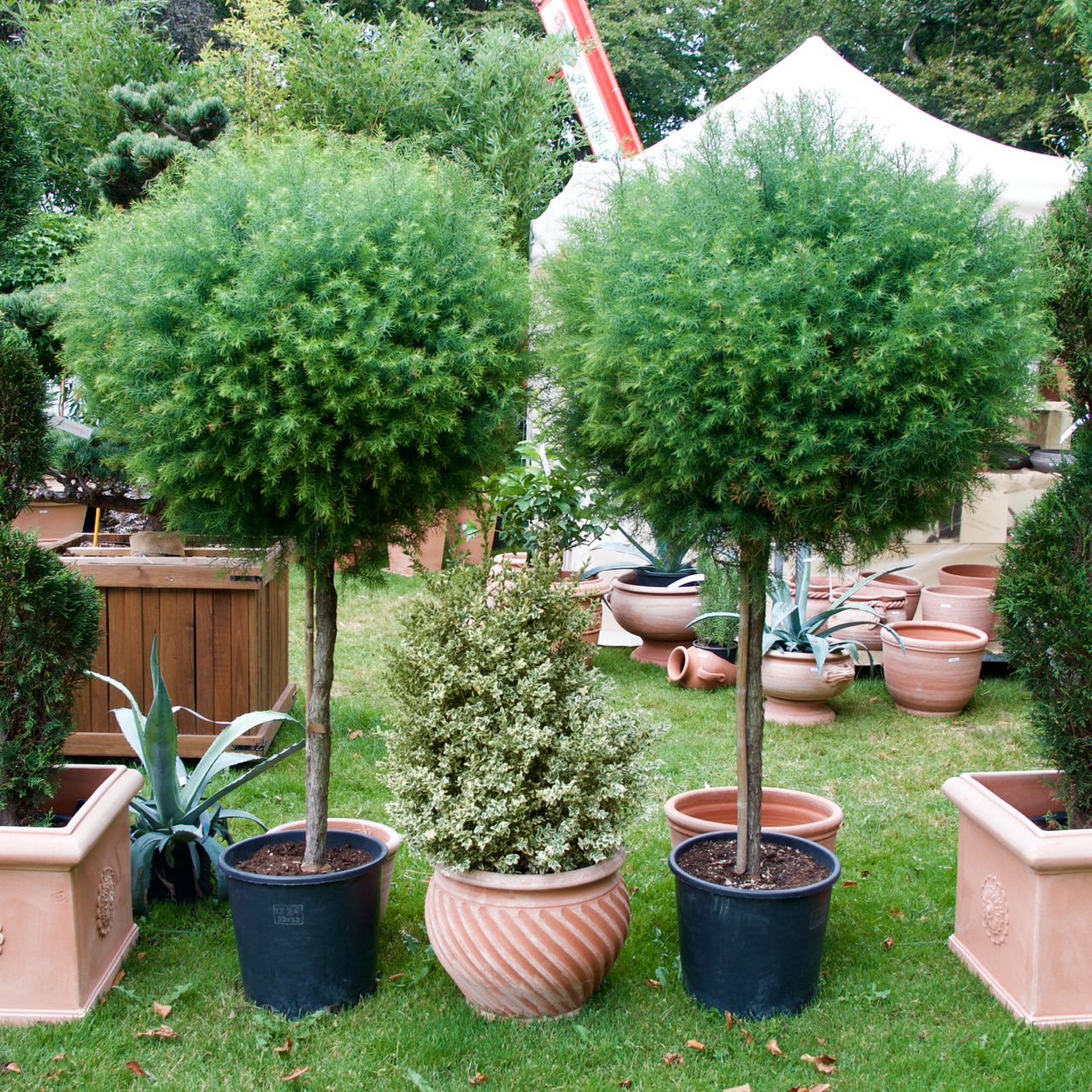 Bilder Trädgård Fler SofieroArkitektens Från QdthxrsC
