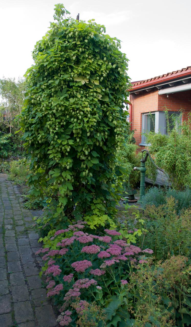 Besök i min morbrors trädgård:)   arkitektens trädgård