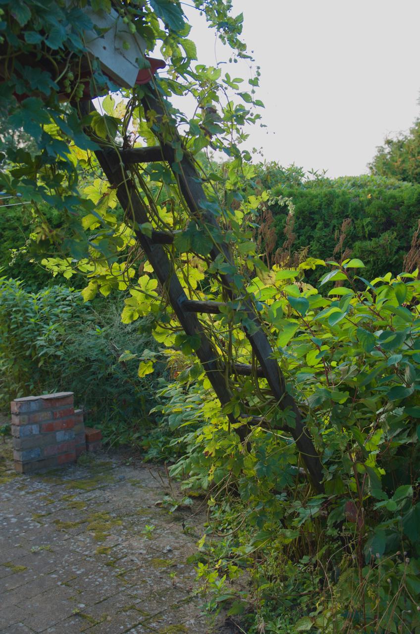 Buxbom arkiv   arkitektens trädgård