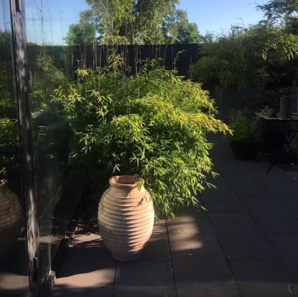 bambu-arkiv - Arkitektens Trädgård : uteplats ljusslinga : Uteplats