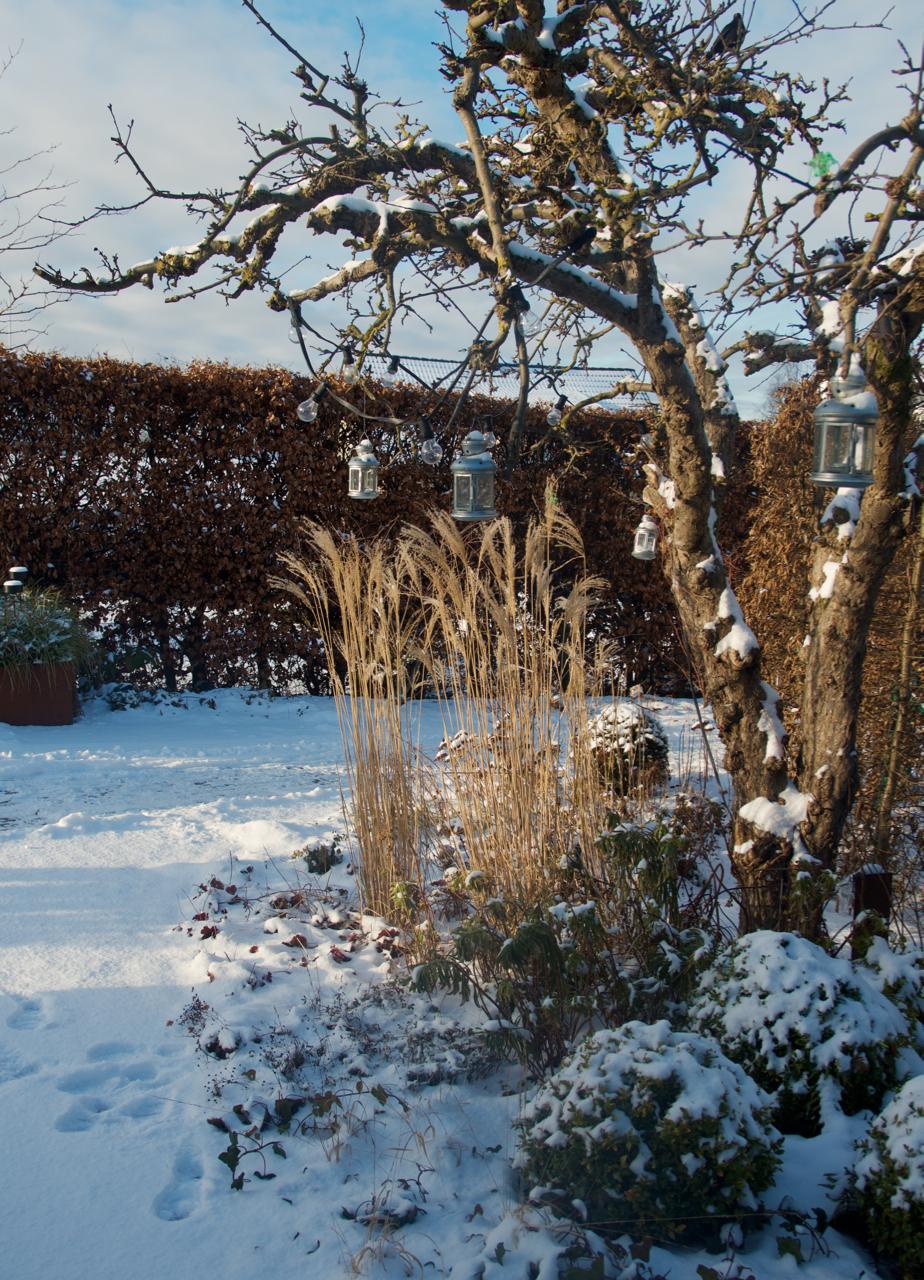 Sol, snö och tips på inspirerande hemsidor!   arkitektens trädgård