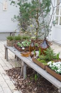 """""""Kvistar och knoppar"""" och vår i min trädgård!"""