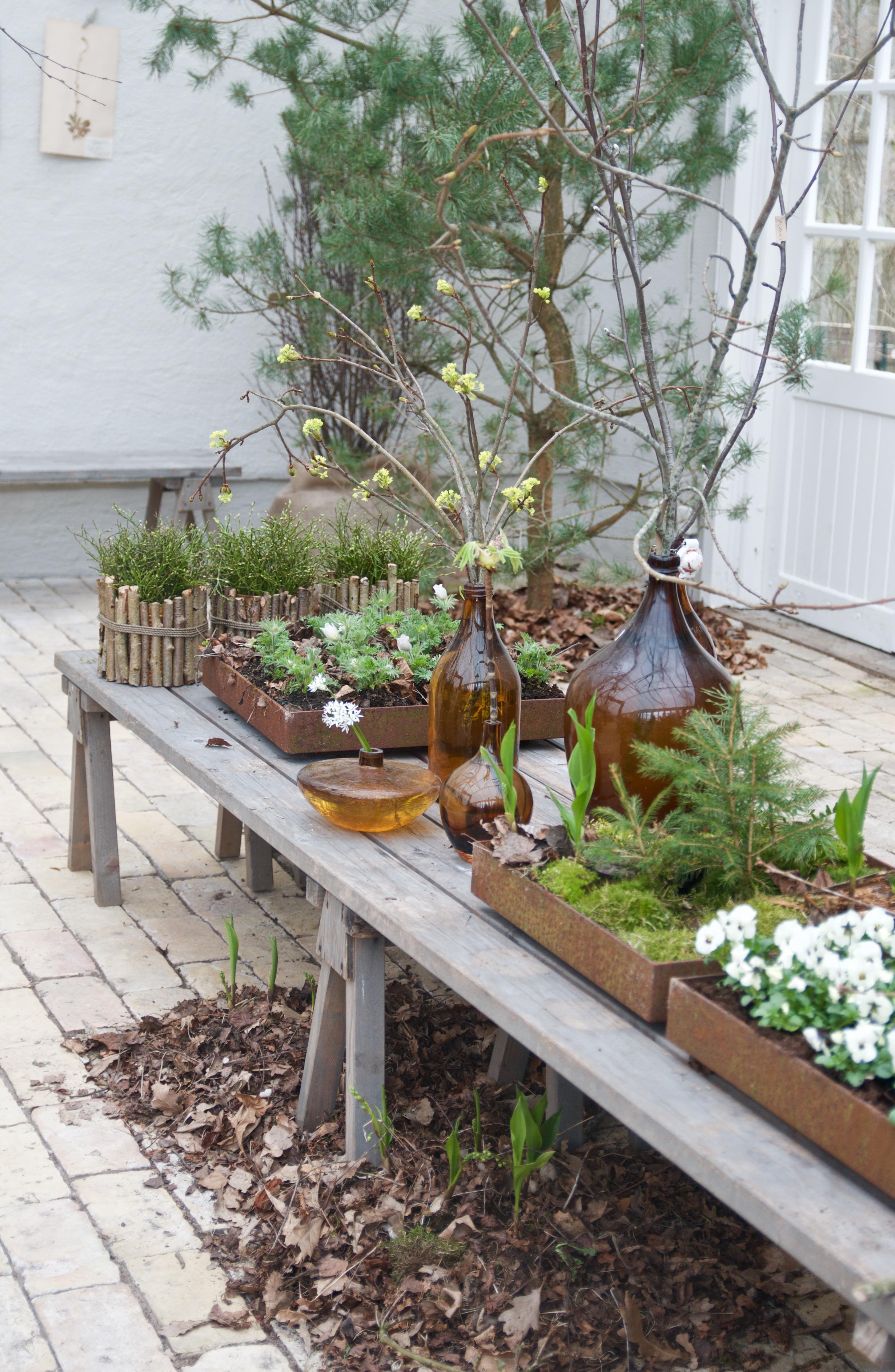 """Kvistar och knoppar"""" och vår i min trädgård!   arkitektens trädgård"""