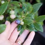 Att köpa växter på nätet- ett samarbete med Granngården