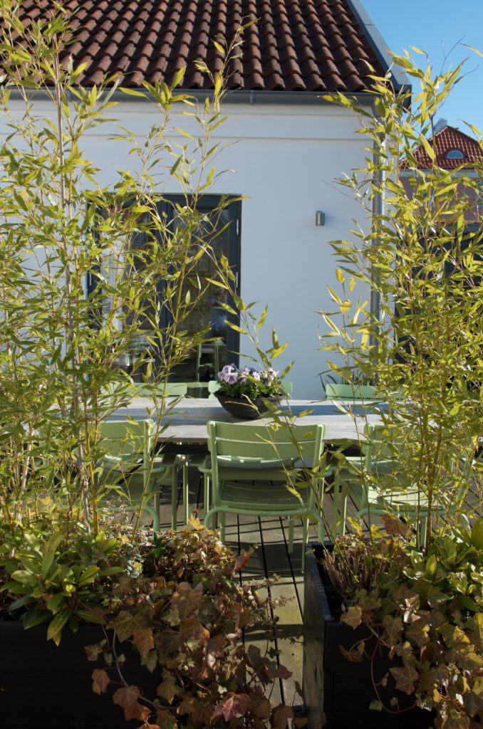 dd384039 Ljuslila penséer på bordet och frodiga Bissetbambu i de rullande  planteringslådorna. Är väldigt sugen på att sätta en massa sommarblommor i  lådorna och riva ...