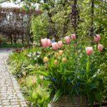 Aprilväder och tulpaner